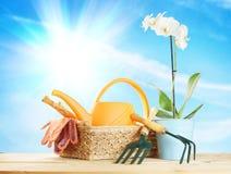 La composición que cultiva un huerto con la orquídea florece y los utensilios de jardinería en una cesta de mimbre Imagenes de archivo