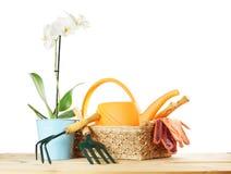 La composición que cultiva un huerto con la orquídea florece y los utensilios de jardinería en una cesta de mimbre Fotos de archivo libres de regalías