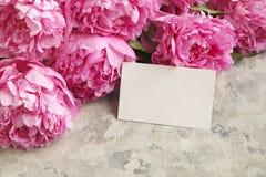 La composition avec la belle pivoine fleurit sur le fond texturisé gris Photos stock