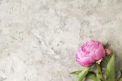 La composition avec la belle pivoine fleurit sur le fond texturisé gris Images stock