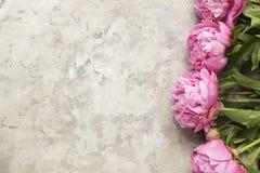 La composition avec la belle pivoine fleurit sur le fond texturisé gris Images libres de droits