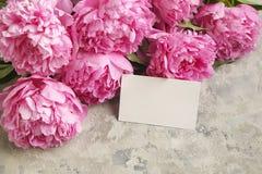 La composition avec la belle pivoine fleurit sur le fond texturisé gris Photographie stock libre de droits