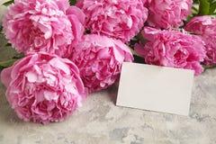 La composition avec la belle pivoine fleurit sur le fond texturisé gris Image stock
