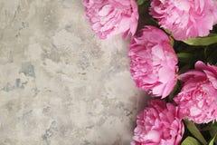 La composition avec la belle pivoine fleurit sur le fond texturisé gris Photo stock