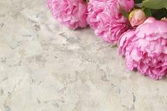 La composition avec la belle pivoine fleurit sur le fond texturisé gris Image libre de droits