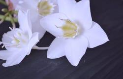 La composition des fleurs Fleurs blanches photos libres de droits