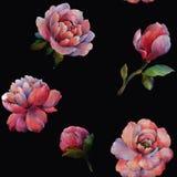 La composition des fleurs de la pivoine Mod?le sans couture d'aquarelle des fleurs Mod?le botanique Pivoines d'aquarelle illustration libre de droits
