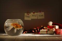 La composition foncée en Noël se composant des poissons d'or dans l'aquarium circulaire au fond brouillé des cadeaux photos libres de droits
