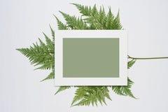 La composition minimale élégante avec le cadre et le vert blancs de photo part sur un fond en bois blanc photos libres de droits