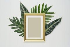 La composition minimale élégante avec le cadre et le vert de photo part sur un fond en bois blanc photos stock