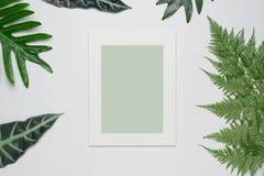 La composition minimale élégante avec le cadre et le vert de photo part sur un fond en bois blanc photos libres de droits
