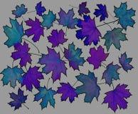 la composition pousse des feuilles érable Photographie stock