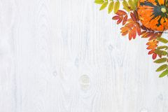 La composizione in autunno va e zucca su fondo di legno bianco Immagine Stock