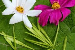 La composizione del fiore situantesi due non una foglia verde immagine stock