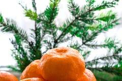 La composizione del nuovo anno dell'albero di Natale si ramifica e manda arancio Fotografia Stock