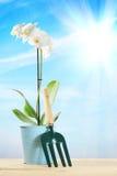 La composizione di giardinaggio con l'orchidea fiorisce e piccolo scaffale del giardino Immagine Stock