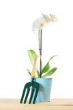 La composizione di giardinaggio con l'orchidea fiorisce e piccolo scaffale del giardino Fotografia Stock Libera da Diritti