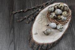 La composizione in Pasqua con le uova di quaglia ed i ramoscelli del salice sbocciano Immagine Stock Libera da Diritti