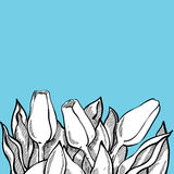 La composizione romantica nel tulipano di vettore, schizza i fiori bianchi su brigh Immagine Stock