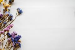 La composizione secca ha colorato i fiori su un fondo bianco Copi lo spazio Fiori romantici Posto per testo e progettazione immagine stock libera da diritti