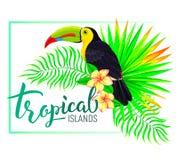 La composizione tropicale nell'isola con il tucano lascia i fiori Fotografia Stock