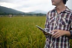 La compressa della tenuta dell'uomo dell'agricoltore dell'agricoltura per ha indicato un rapporto su riso agr Fotografie Stock Libere da Diritti