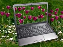 La computadora portátil está entre tulipanes Imagen de archivo libre de regalías