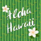 La conception de vecteur du texte de lettrage de brosse d'Aloha Hawaii sur le bambou refoule le fond et les fleurs frangipany Image libre de droits