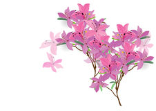 La conception tirée par la main de brosse d'aquarelle de fleurs d'azalée a isolé la photo pour l'objet Image stock