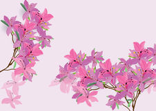 La conception tirée par la main de brosse d'aquarelle de fleurs d'azalée a isolé la photo pour l'objet Images stock