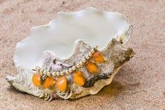 La concha de berberecho exótica del mar Imágenes de archivo libres de regalías