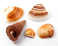 La concha marina Fotos de archivo