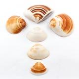 La concha marina Foto de archivo libre de regalías