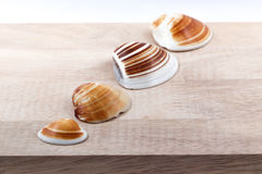 La concha marina Fotografía de archivo libre de regalías