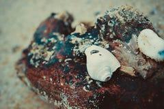 La concha marina Imagenes de archivo