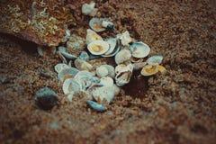 La concha marina Imagen de archivo libre de regalías