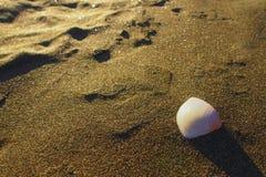 La concha marina se lavó para arriba en la playa de Piha, Nueva Zelanda, isla del norte fotos de archivo