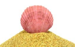 La conchiglia rosa Immagini Stock