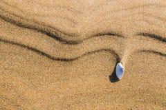 La conchiglia si è mossa dal vento nella sabbia Fotografie Stock Libere da Diritti
