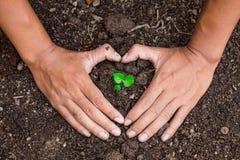 La conservazione dei trattamenti naturali degli alberi è fatta con due mani Immagini Stock Libere da Diritti