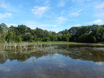 La conserve de faune avec la ligne d'arbre forestier s'est reflétée dans un lac Photographie stock libre de droits