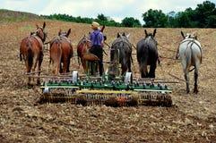 La contea di Lancaster, PA: Gioventù di Amish che ara campo Immagini Stock Libere da Diritti