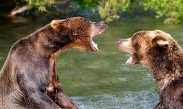 La conversación del oso Foto de archivo libre de regalías