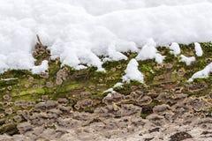 La copertura della corteccia di albero con la muffa e muschio e neve ha strutturato il fondo Fotografia Stock