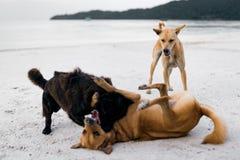 La coppia dell'isola insegue insieme il divertimento di sollevamento alla spiaggia Fotografie Stock Libere da Diritti