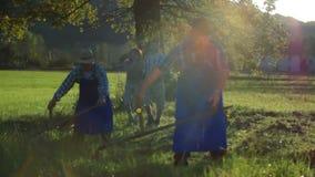 La coppia di medio evo cammina sul archivata dove gli agricoltori stanno falciando con le falci archivi video