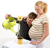 La coppia in grande aspettativa innaffia il fiore Fotografia Stock