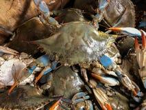 La coquille molle marche en crabe dans un panier au marché Photographie stock
