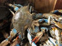La coquille molle marche en crabe dans un panier au marché Photo libre de droits