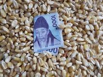 La Corée du Sud, le pays consommateur de maïs, le tas des grains de maïs et le billet de banque sud-coréen de 1000 gagnés photo libre de droits